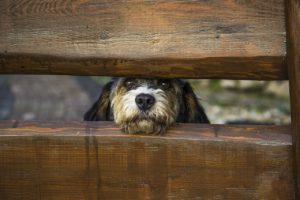 Easdale: the best pet care