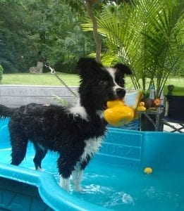 Fae with rubber duck in mouth - Poolside Time Activity